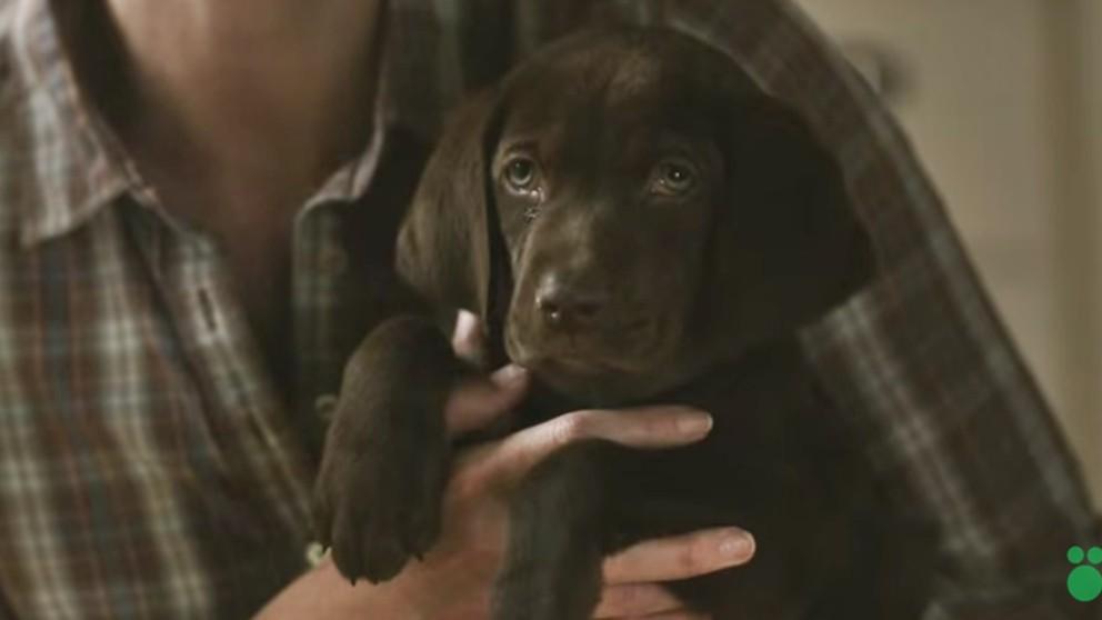 短片 | 催泪感人治愈系广告《男孩与他的狗狗》-金融微周刊