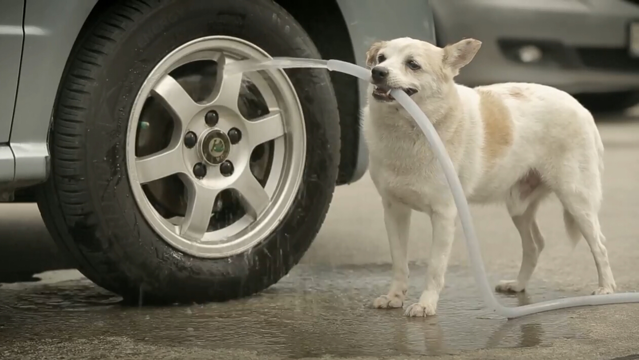 短片 | 流浪狗化身丘比特幽默广告《狗的报恩》-金融微周刊