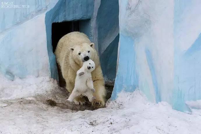 15张经典动物母爱照片,温暖你的心-金融微周刊