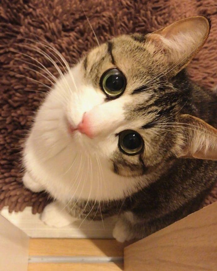 猫GIF : 有一种猫会看到你萌出血-金融微周刊