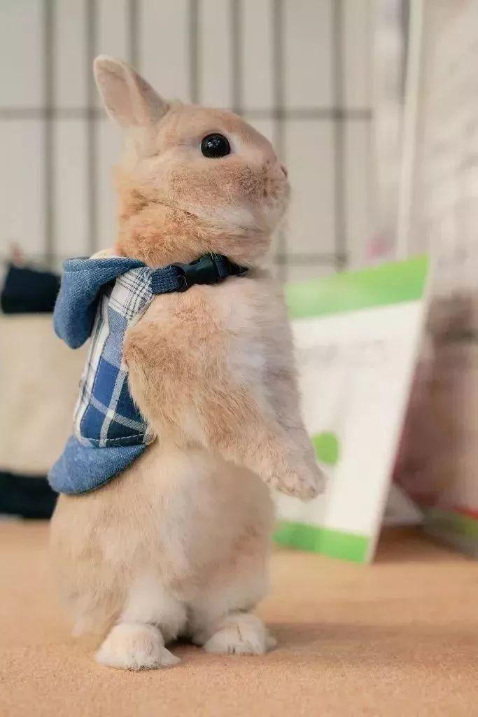 日本这位铲屎官一口气养了8只兔兔,每一只都萌得不可思议-金融微周刊